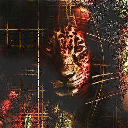 myedit tiger fantasy drama savenature