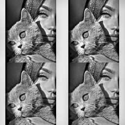photography blackandwhite cat