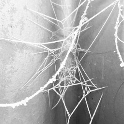 freetoedit spiderwebs photography blackandwhite frosted