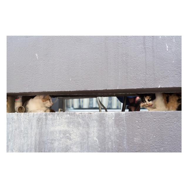 Accept negatives #travel #traveling #vacation #visiting #instatravel #instago #trip #holiday #travelling #tourism #tourist #instapassport #instatraveling #mytravelgram #travelgram #travelingram #igtravel #travelphotography #traveller #traveler #malaysia #georgetown #nikon #nikonphotography #d750 #travelphotography #cat #straycat #wall