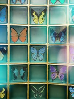 freetoedit window butterfly exhibition collection