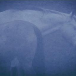 horses foggymorning