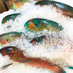 beauty parrotfish ice supermarket