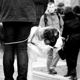 streetphotography verona dog dogs blackandwhite