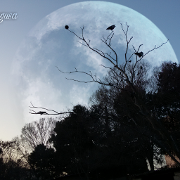 edited effect sky trees birds