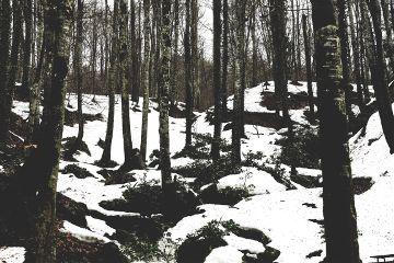 freetoedit tree snow landscape nature