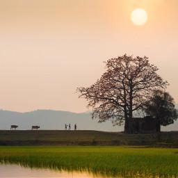 silhouettes silhouettesoftrees sunset farmlife nature
