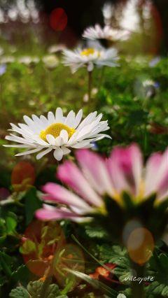 bokeh naturephotography flowers springflowers