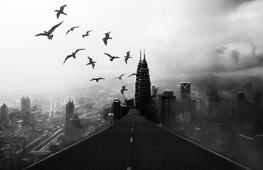 dark road building birds freetoedit