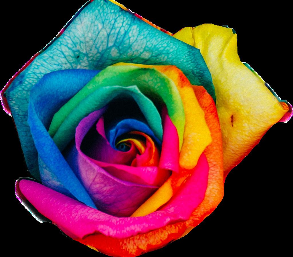 #FreeToEdit #ftestickers #flowers #rose