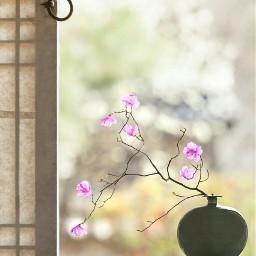 korea beauty macro pot flowr