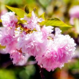 tree trees crapemyrtle flower flowering